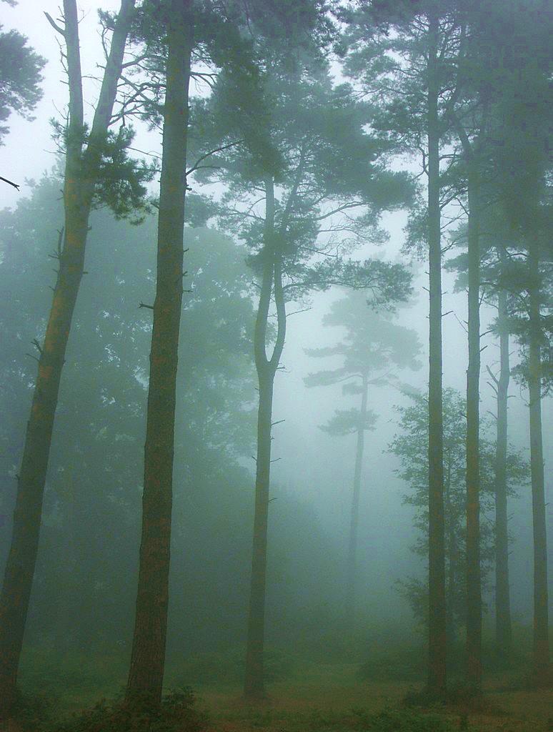 Misty morning by Alex-34178545_7fae8b2533_o.jpg